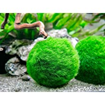 for Freshwater /& Saltwater Fish Double Bottom Seal Resilia Plastic 3 Inches Wide Leak-Proof Shipping Bags for Live Fish